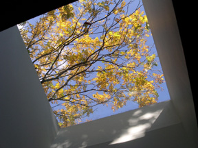 skylight-in-fall.jpg